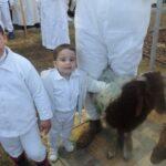 Passover sacrifice- slaughtering